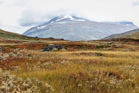 Mountain landscape with cotton-grass in Sweden national park Sarek around the Royal track in stormy weather. selective focus Standard-Bild - 140372805