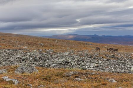 Impressive view of the mountains of Sarek national park in Swedish Lapland. selective focus.