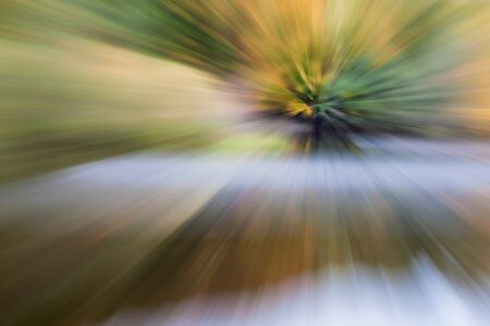 Abstract photo, A tree standing in the water photographed with different effects of motion and zoom. Colorful textured background. long shutter speed.