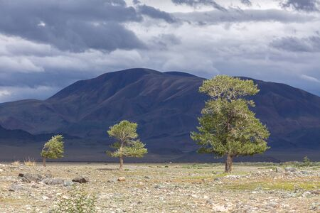 Typical view of Mongolian landscape. Mongolian Altai Mongolia, steppe. Stock Photo