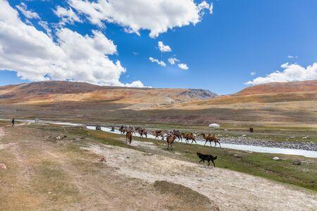 The nature of Mongolia. Camel caravan near the mountain region of the Mongolian Altai. Shepherd dog looks at tourists.