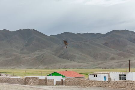 a large bird of prey flies over the roofs of houses of a small settlement in the mountains of Mongolia
