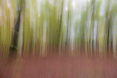 Abstract photo, forest in summer photographed with different effects of motion and zoom. Colorful textured background. long shutter speed.