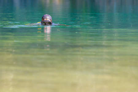diver in mask plunges into the water, looks into the camera. Head on the surface.