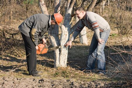 Work on the garden pruning, which is carried out by two men