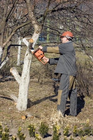 abatis: The garden worker, cutting trees and branches Stock Photo