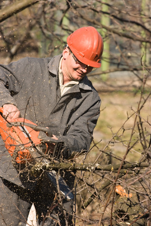 The garden worker, cutting trees and branches Stock Photo