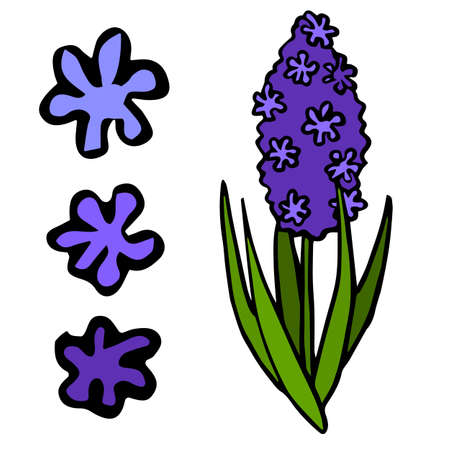 Purple hyacinth flower on white isolated backdrop Vectores