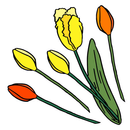 Bunch of meadow tulips on white isolated backdrop Vectores
