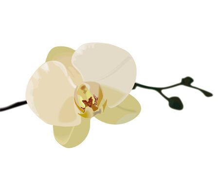 beautiful white orchids on a white background.