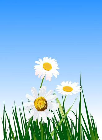 Daisies in grass against a blue sky  Stock Vector - 18307915