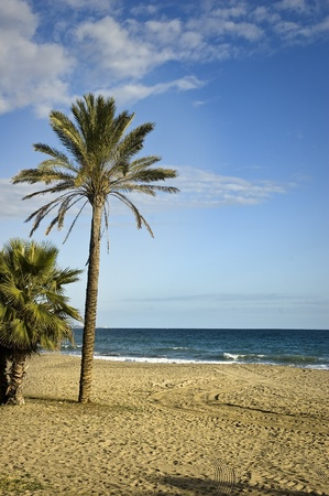 A palm on a beach of Marbella (Costa del Sol), Spain Stock Photo - 12072896
