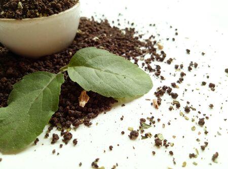 바질 잎 찻잎 스톡 콘텐츠