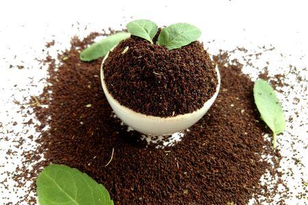 Tea Leaves with Basil Leaf