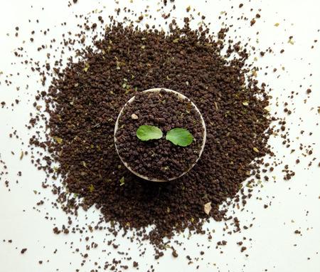 バジルの葉と茶葉 写真素材