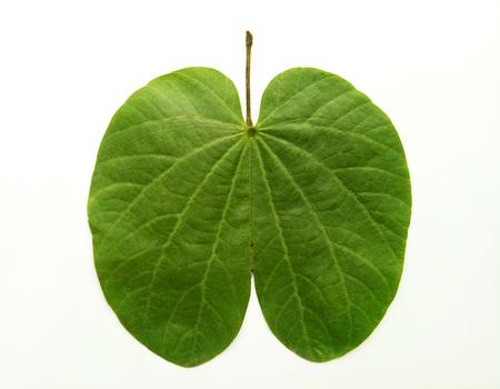 Dussehra Leaf Indian Festival