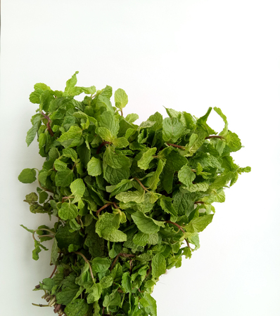 Fresh Mint natural and herbal leaves