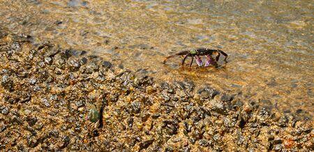 Sea Crab Aquatic Animal on Shore