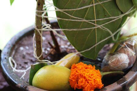 Sacred Plant Worship Indian Festival Stock fotó