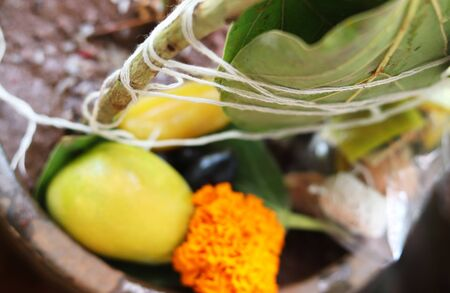 Sacred Plant Worship Indian Festival Imagens