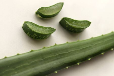 Aloe Vera Plant Leaf