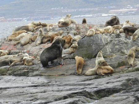 seals elephants of tierra del fuego in Argentina