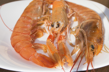 bluefish: crustaceans typical of the mediterranean sea: raw langoustines imperial