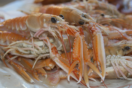 crustaceans typical of the mediterranean sea: raw langoustines photo
