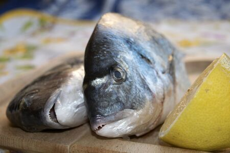 gilthead bream: freash gilthead bream on a wooden cutting board