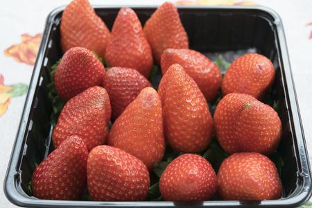 seasonal: freshly picked fruit: fresh and ripe seasonal strawberries