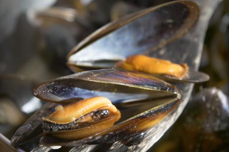 detail of drunken mussels on a wooden spoon