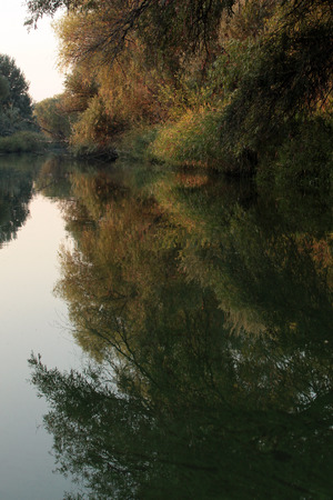 droop: summer in the delta of the Don river Stock Photo