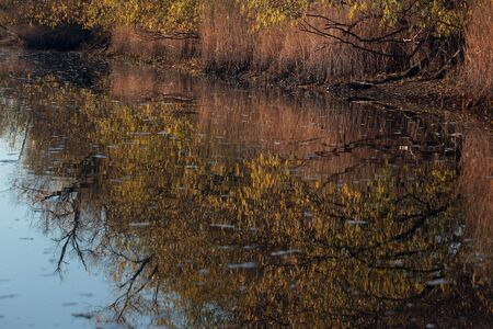 dont drink and drive: reflection of trees and reeds in the water