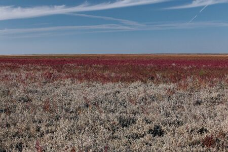 salt marsh: salt marsh in the Kalmyk steppe Stock Photo