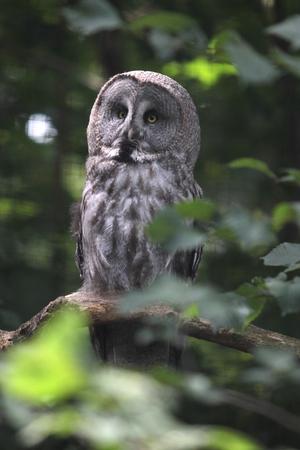 aviary: owl in the aviary