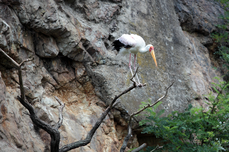 amphibia: stork sitting on a branch