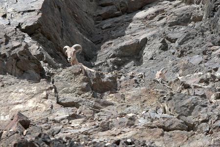 herbivores: rocky mountain aviary with herbivores