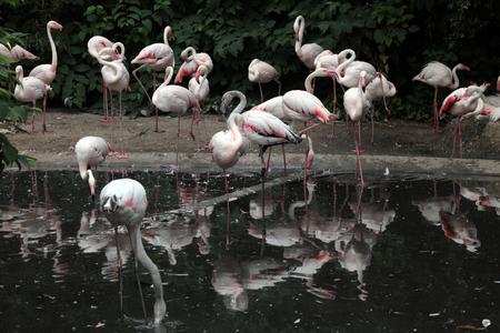aviary: flamingos in the aviary
