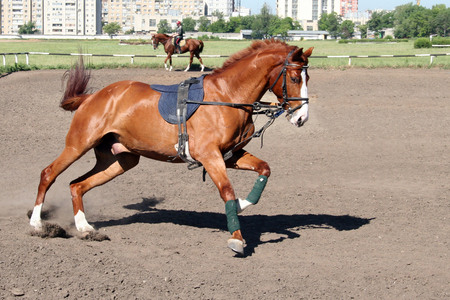 racetrack: training at the racetrack