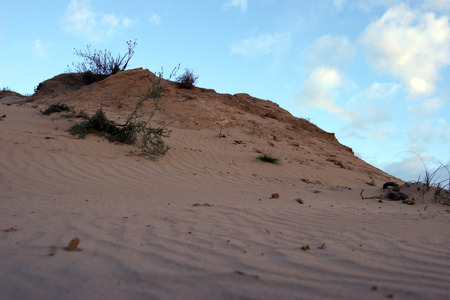 delta: the dunes in the Delta of the river don
