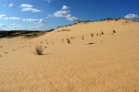 struggle for life: sandy desert in the North-East of Rostov region, the struggle for life
