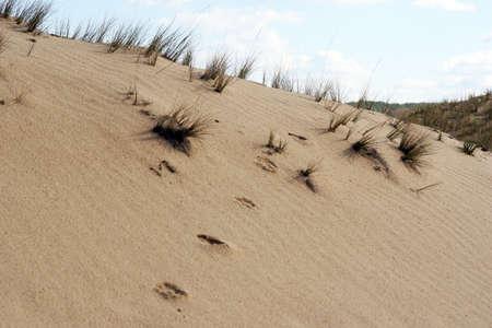 sandy desert in the North-East of Rostov region, the struggle for life