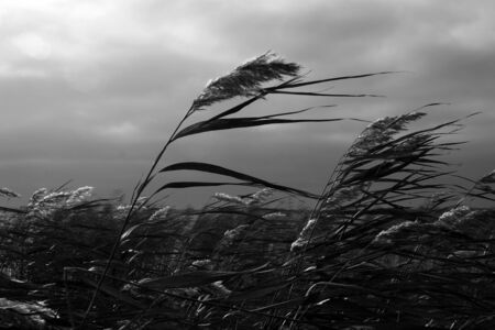 in reed beds Stock Photo