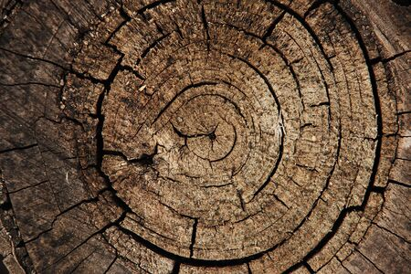 annual ring annual ring: end cut of a tree Stock Photo