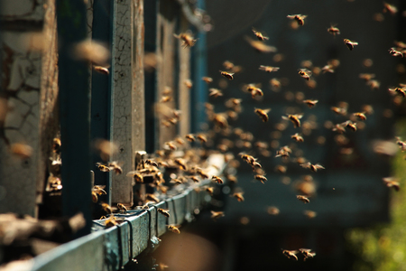 the work of bees Banque d'images