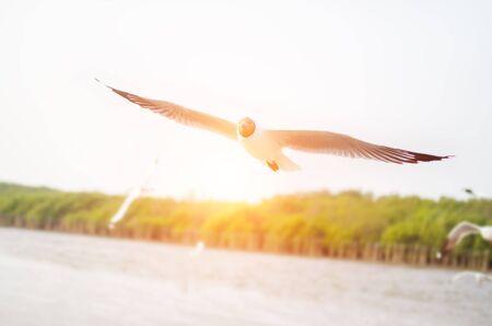 samutprakarn: Seagull on the sun Stock Photo