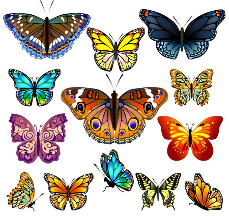 Set of colorful realistic isolated butterflies.Vector illustration