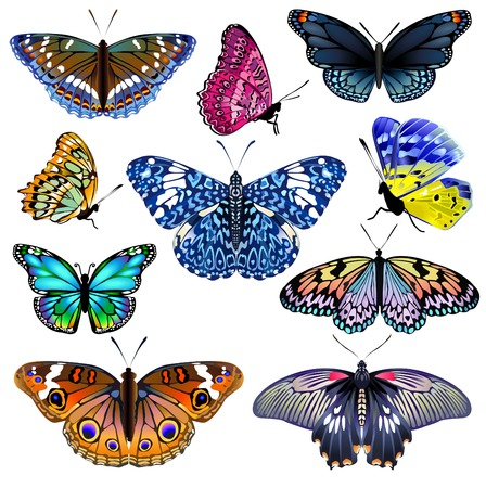 blue butterfly: Set of colorful realistic isolated butterflies.Vector illustration