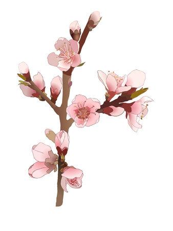 Naadloos patroon met bloeiende amandel tak met roze bloemen.