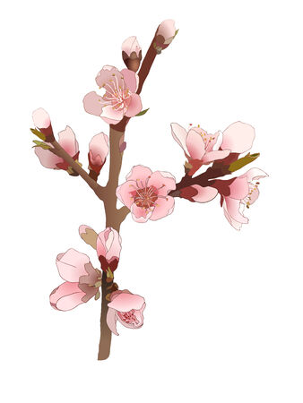 Seamless pattern with blossoming almond branch with pink flowers. Vector